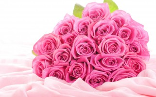 Pink Roses wallpapers and stock photos