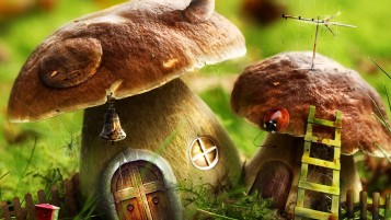 Mushrooms  House wallpapers and stock photos