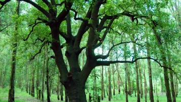 Ombu Tree wallpapers and stock photos