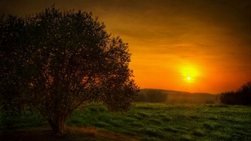 Sunset Tree wallpapers and stock photos