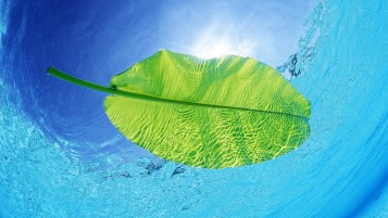 Swimming Leaf wallpapers and stock photos
