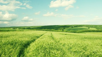 Bright Green Field wallpapers and stock photos