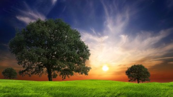 Lovely Sun & Trees wallpapers and stock photos