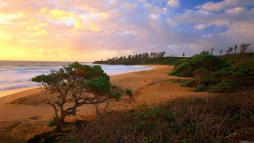 Beach Hedge & Trees wallpapers and stock photos