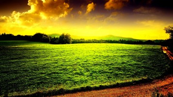 Lawned Field wallpapers and stock photos