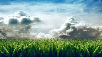 Plant Field wallpapers and stock photos