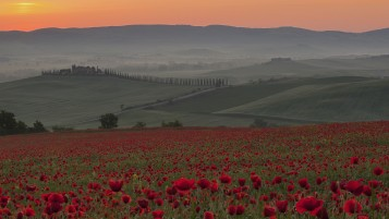 Random: Sunrise Poppies Italy