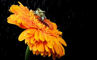 Cute Froggy Orange Flower wallpapers and stock photos