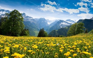 Random: Dandelions In The Mountains