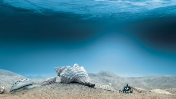 Underwater Sea Shells wallpapers and stock photos