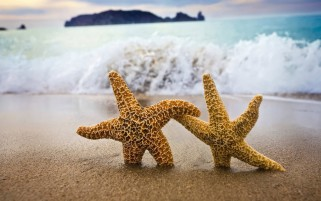 Stars Hugging on the Beach wallpapers and stock photos