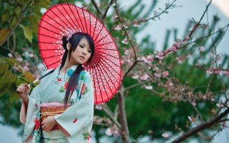 Kimono and Cherry Flower wallpapers and stock photos