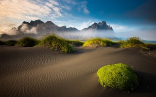 Green Desert Plants wallpapers and stock photos