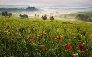 Random: Tuscany Meadow