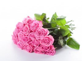 Pretty Pink Roses wallpapers and stock photos