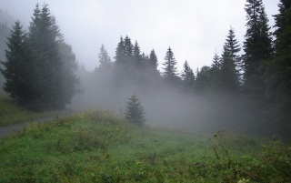 Forest fog wallpapers and stock photos