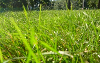 Grass in park wallpapers and stock photos