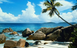Beach palm tree wallpapers and stock photos