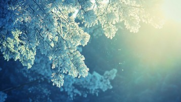Frozen Plants wallpapers and stock photos