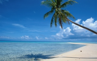 Beach tree wallpapers and stock photos