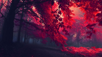 Red Autumn wallpapers and stock photos