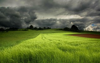 Random: Grass Green Field & Dark Cloud