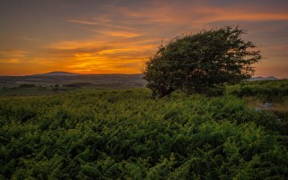 Sunset Tree In Farn Field wallpapers and stock photos
