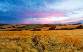 Sunset Field England wallpapers and stock photos