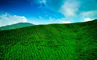 Tea Mountains wallpapers and stock photos