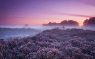 Purple Foggy Autumn wallpapers and stock photos