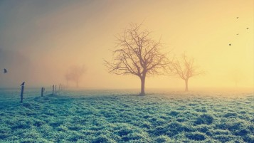 Sunrise Fog Grass Field Trees wallpapers and stock photos