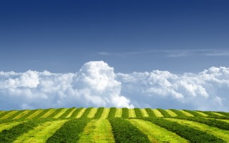 Grass Green Field Over Clouds wallpapers and stock photos