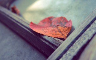 Fallen Red Leaves wallpapers and stock photos