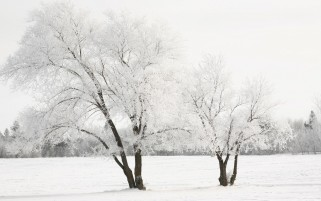 Nice Snow Trees wallpapers and stock photos
