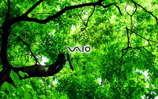 VAIO green leafs wallpapers and stock photos