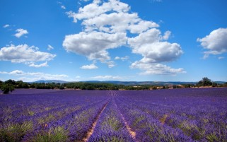 Lavender Field Sunny Clouds wallpapers and stock photos
