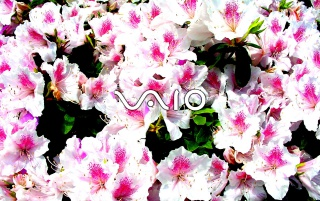 VAIO feeling wallpapers and stock photos