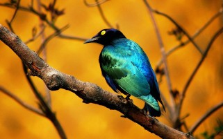Colourful Bird wallpapers and stock photos