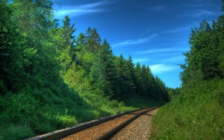 Rail Road Between Sunny Forest wallpapers and stock photos