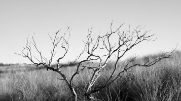 Random: Monochrome Tree & Gray Grass