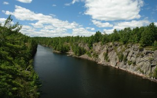 Long River Through Forest wallpapers and stock photos