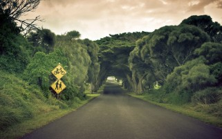 Beautiful Road & Trees wallpapers and stock photos
