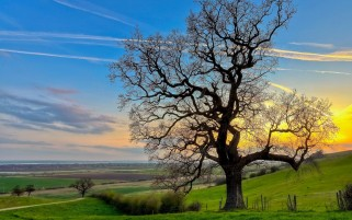 Village Tree & Fields wallpapers and stock photos
