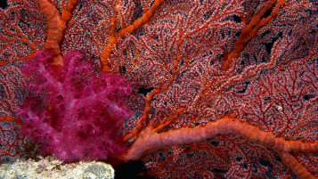 Corals wallpapers and stock photos