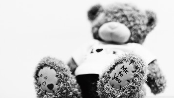 Random: Teddy Bear
