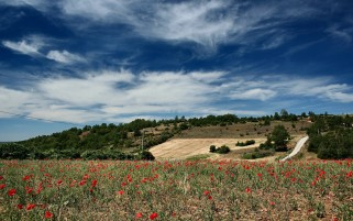 Poppy Landscape wallpapers and stock photos