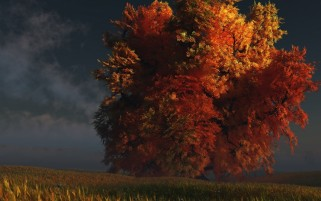 King Tree Autumn wallpapers and stock photos