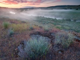 Foggy River & Plant Field wallpapers and stock photos