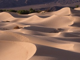 Desert Hills & Plant wallpapers and stock photos
