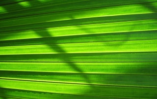Green nature wall wallpapers and stock photos